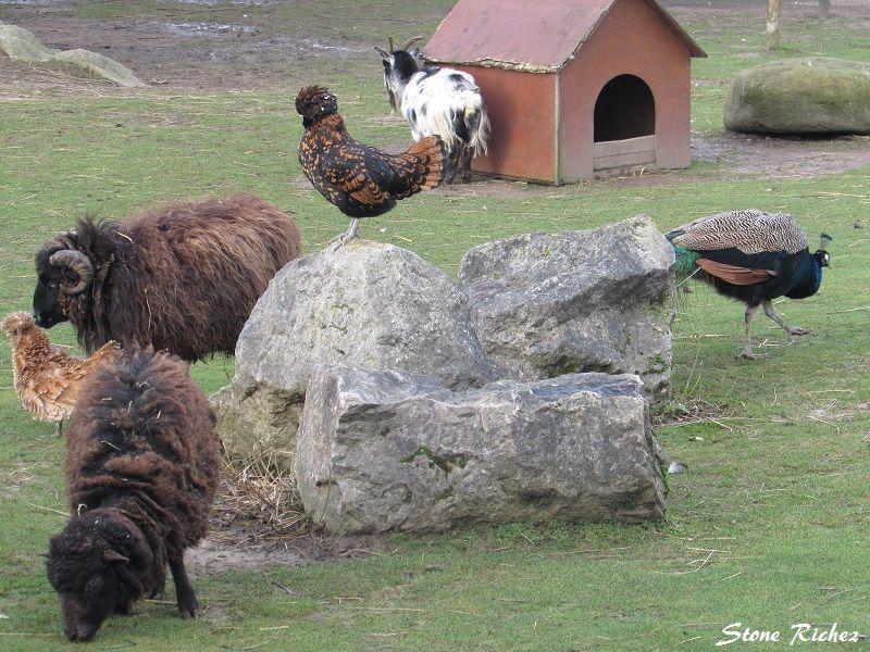Au parc des falaises le portel 3 for Parc animaux yvelines